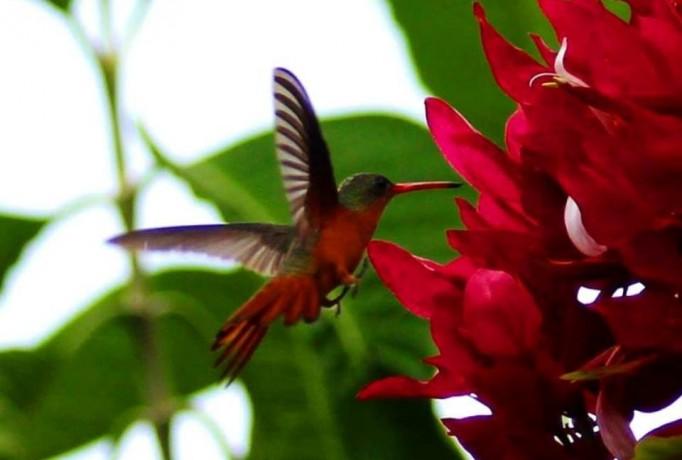 flora_fauna_costa_rica11-ce1e754a80